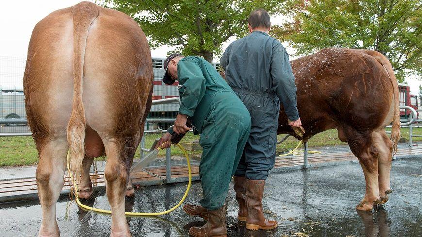Datant d'un agriculteur laitier
