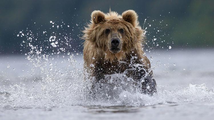 Conseil aux Ukrainiens : ne chatouillez pas l'ours russe