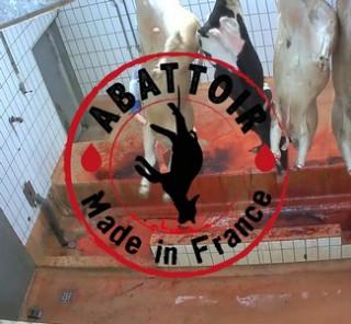 Nouveaux actes de cruauté découverts dans un abattoir - Egalite et ... 9d60886eb55