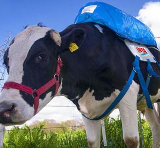 c09a93bc6ac La mort programmée des petits producteurs laitiers - Egalite et ...
